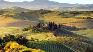 Тосканские виноградники