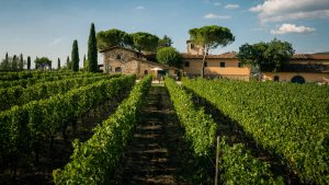 Viticcio винодельня